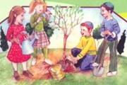 עץ הצפצפה